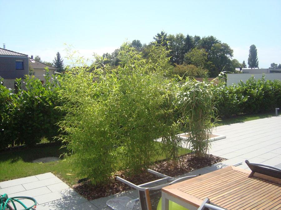 Bambous en alsace cr ation de massif for Amenagement jardin avec bambou